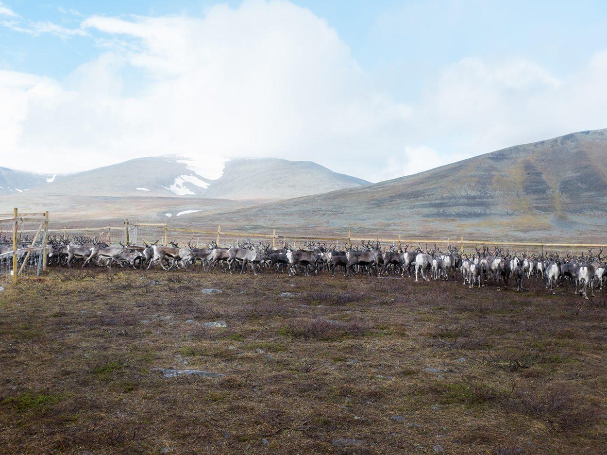 Viktigt mål om samiska rättigheter